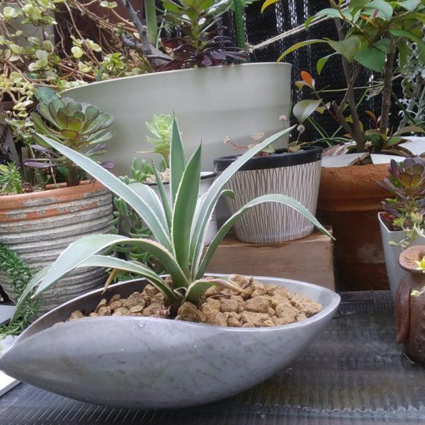 グリーン・Rな鉢