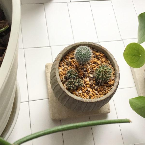 小さな癒しアイテム 植物インテリア